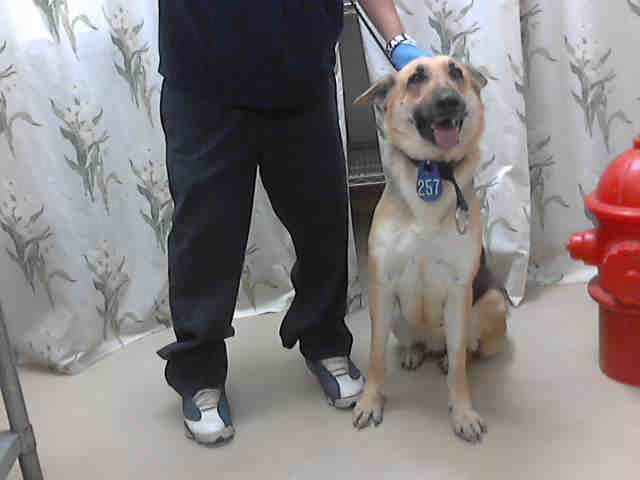 Texas Urgent Id A396878 Is A 1 5yo German Shepherd Dog Gsd In Need Of A Loving Adopter Rescue At Harris German Shepherd Dogs Dog Adoption Homeless Pets