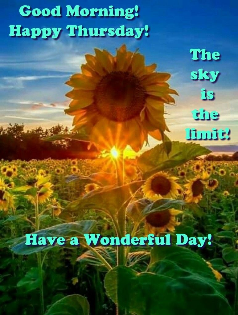 Good Morning Happy Thursday The Sky Is The Limit Inspirational Quote Sunflower Pictures Sunflower Wallpaper Flowers Photography