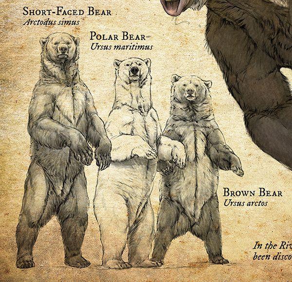 Natural History Museum Signage Part I On Risd Portfolios Short Faced Bear Extinct Animals Bear Art