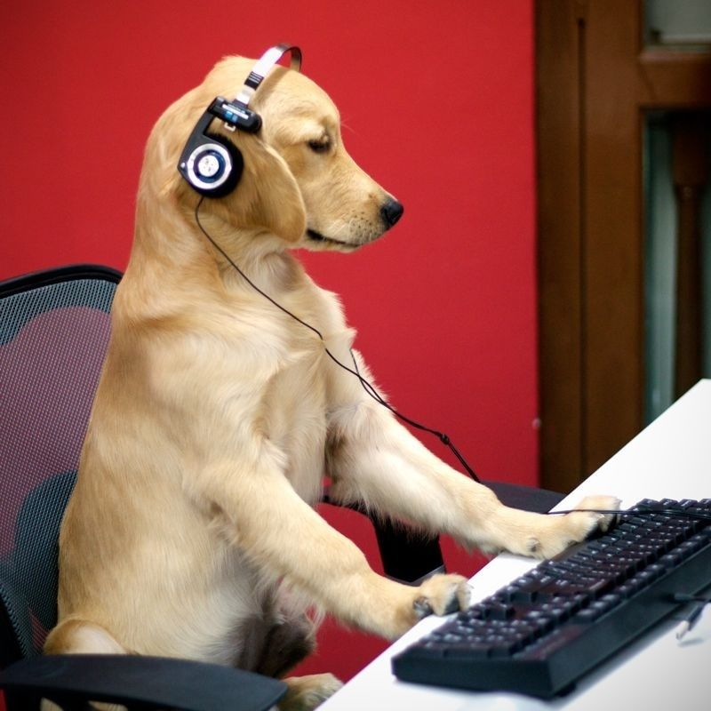 Golden retriever playing video games pup animals funny