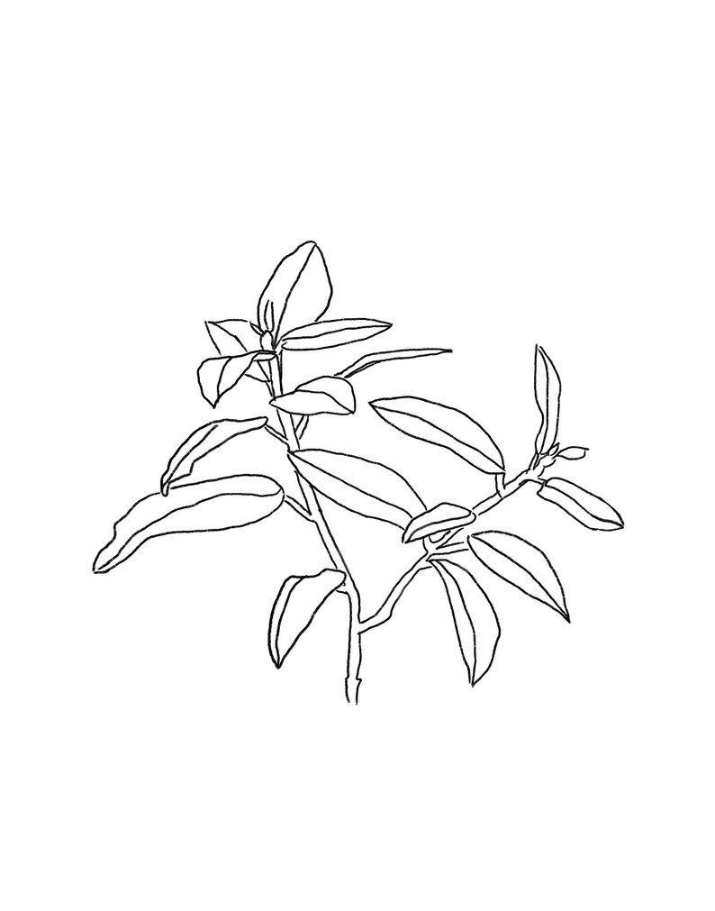 Botanical print black and white leaf line drawing