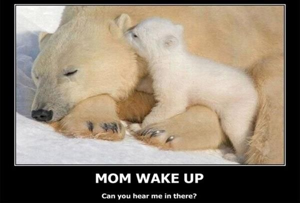 Wake Up | Funny Pictures!