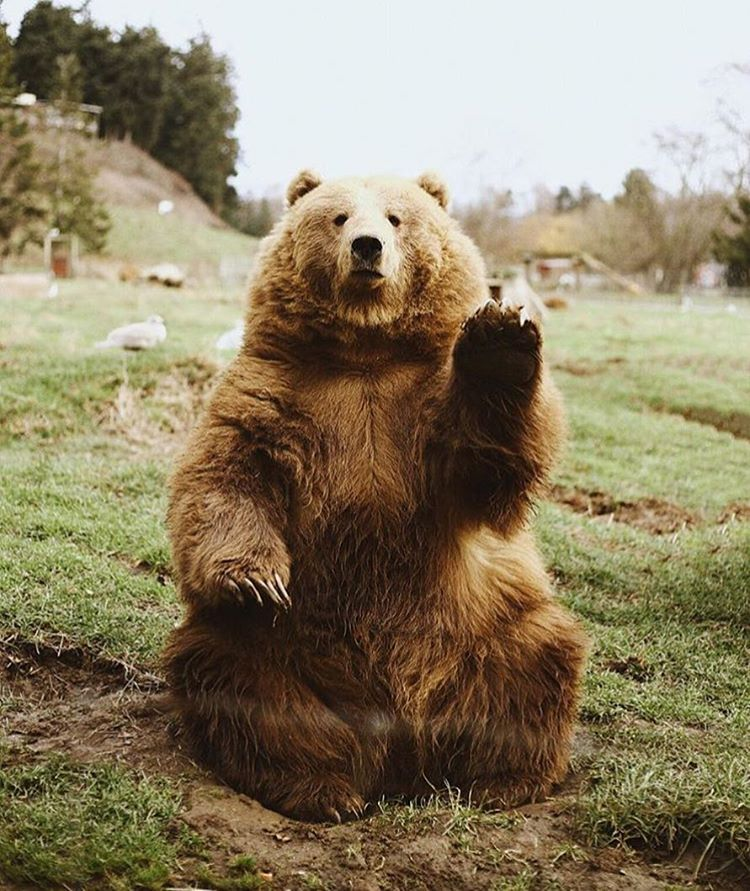 """""""we'll never get tired of this bear, photography by ..."""