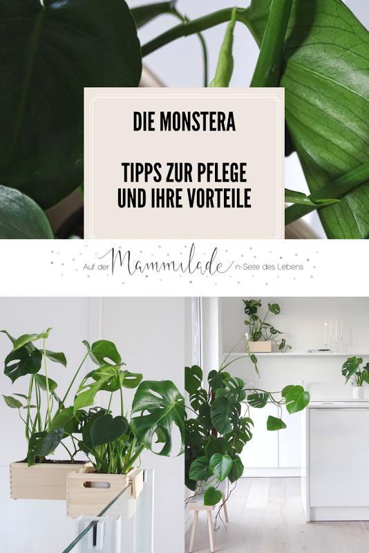 DIY-Blumenkasten aus Holz zum Aufhängen an Treppengeländern und Galerien   Ein Indoor-Balkon und Monstera-Garten. Plus: Tipps zur Monstera-Pflege - Mammilade