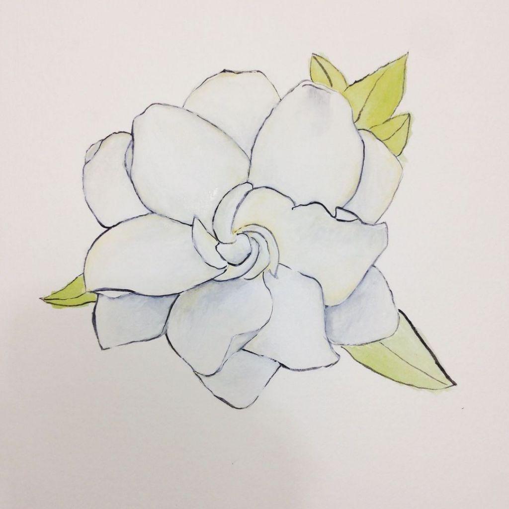 Gardenia Drawing At Getdrawings