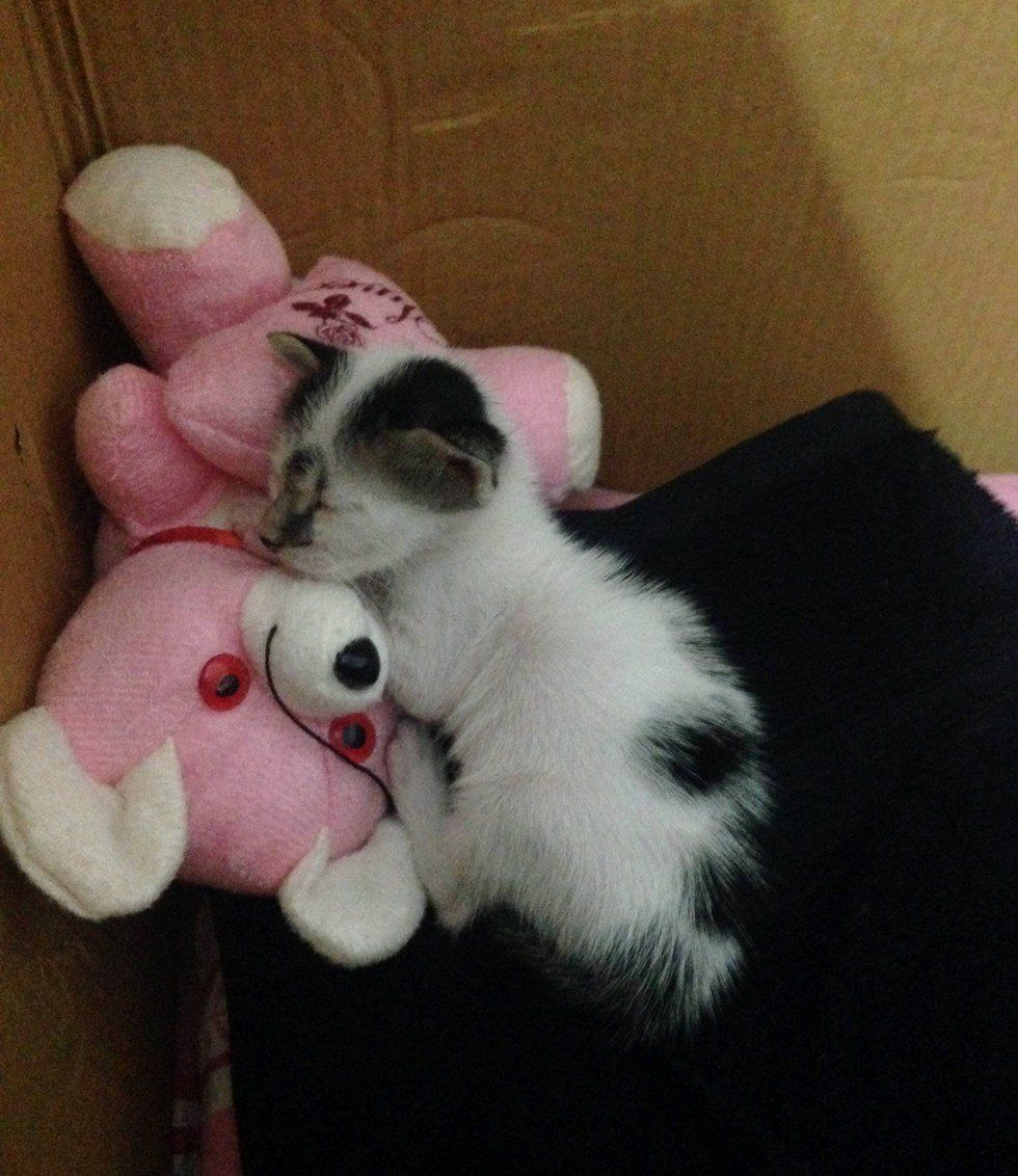Abandoned Kitten Baby Animals Pictures Baby Animals Funny Love Your Pet