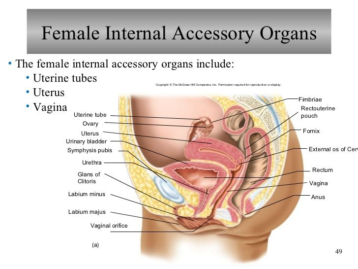 Female Reproductive System Histology Anatomy Physiology