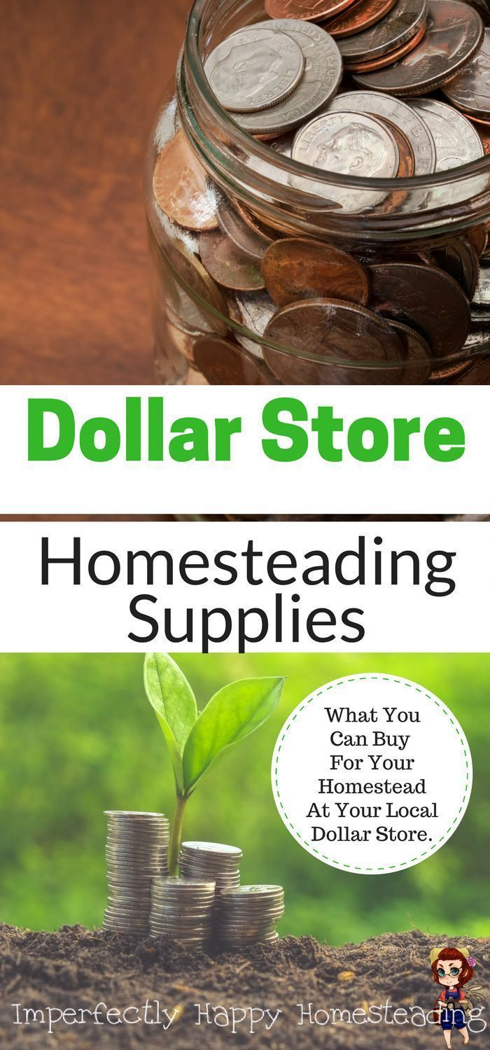 Dollar Store Homestead Supplies is part of Dollar stores, Homesteading, Homesteading diy projects, Urban homesteading, Homesteading diy, Homestead survival - Dollar Store Homestead Supplies, you ask   you betcha! Maybe you'll be as surprised as I was with how many dollar store homestead supplies you can find!