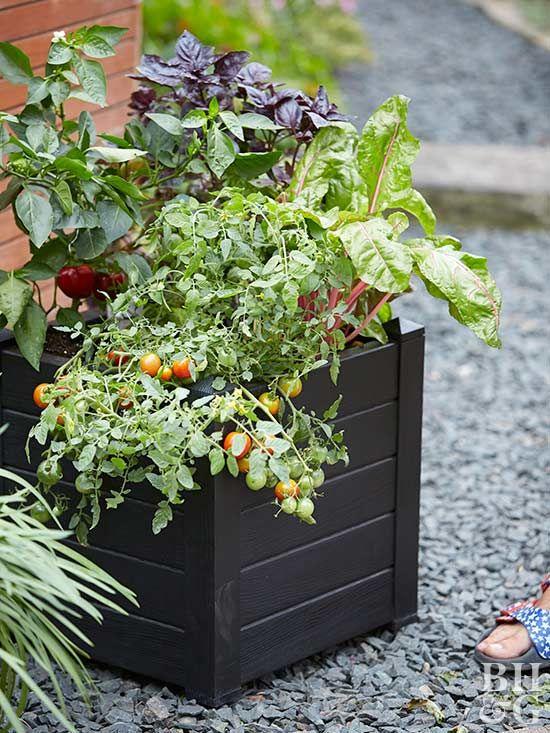 Grow a Ve able Container Garden