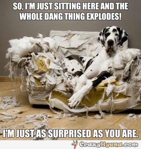 Tooo funnnyy !!!!