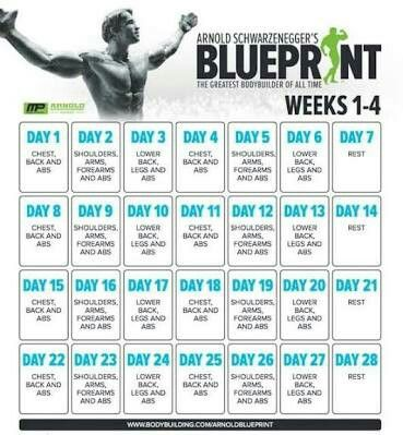 Arnold blueprint work out pinterest arnold schwarzenegger arnold blueprint malvernweather Gallery