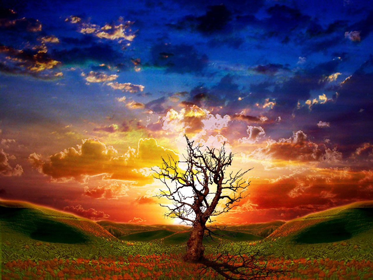 Animated Wallpapers Animated Pictures Free Animation Photo Sunset Landscape Nature Wallpaper Nature