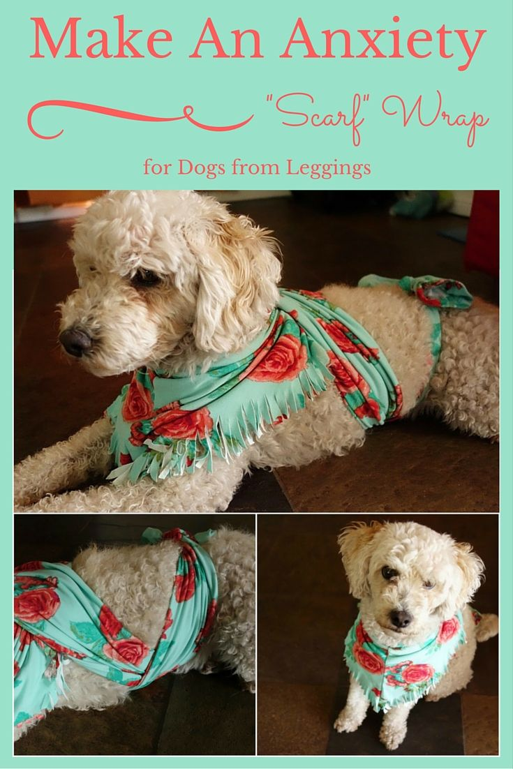 Fireworks festivals and family gatherings can all cause your pooch fireworks festivals and family gatherings can all cause your pooch anxiety fix it quick with this diy that will only take you a few minutes solutioingenieria Choice Image