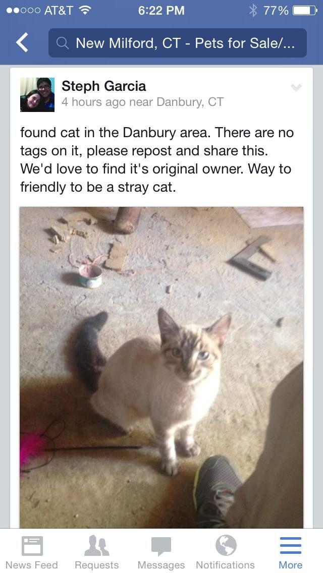 Danbury Area Pets For Sale Found Cat Cats