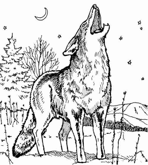 coyote tattoo - Google Search | tattoo ideas | Pinterest