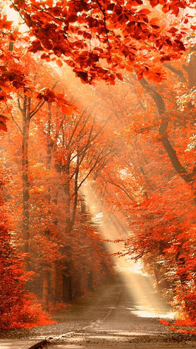 As Things Begin To Change In Your Life Look For The Light From The Heavens To Guide Your Path Beautiful Nature Autumn Beauty Nature Photography
