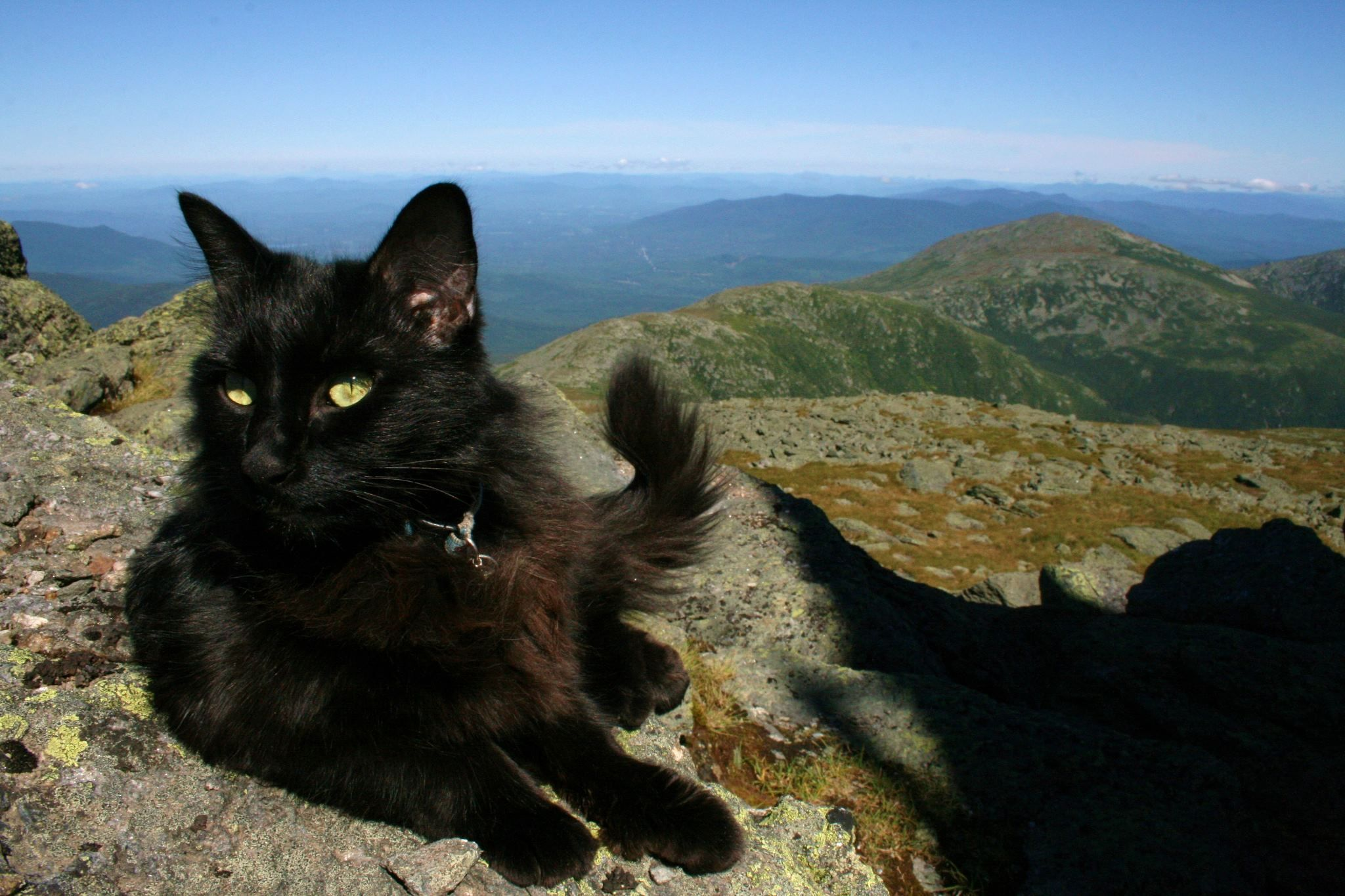 marty the summit cat at mount washington observatory enjoys the