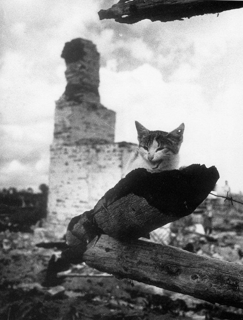 Mikhail Savine - Chat, 1943