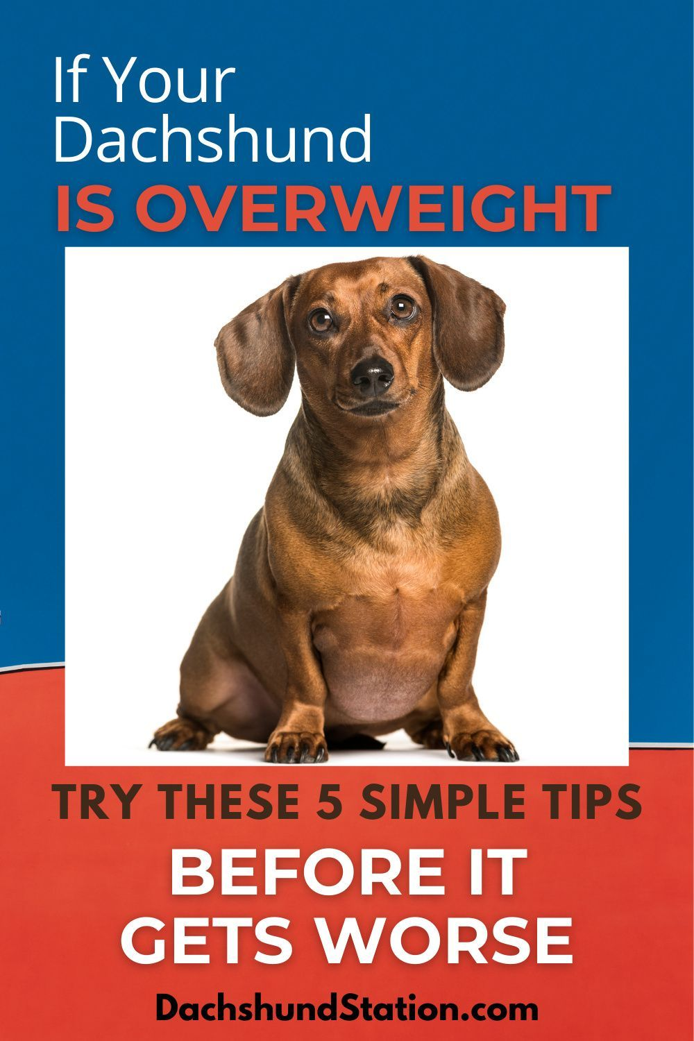 Pin On Dog Food Tips
