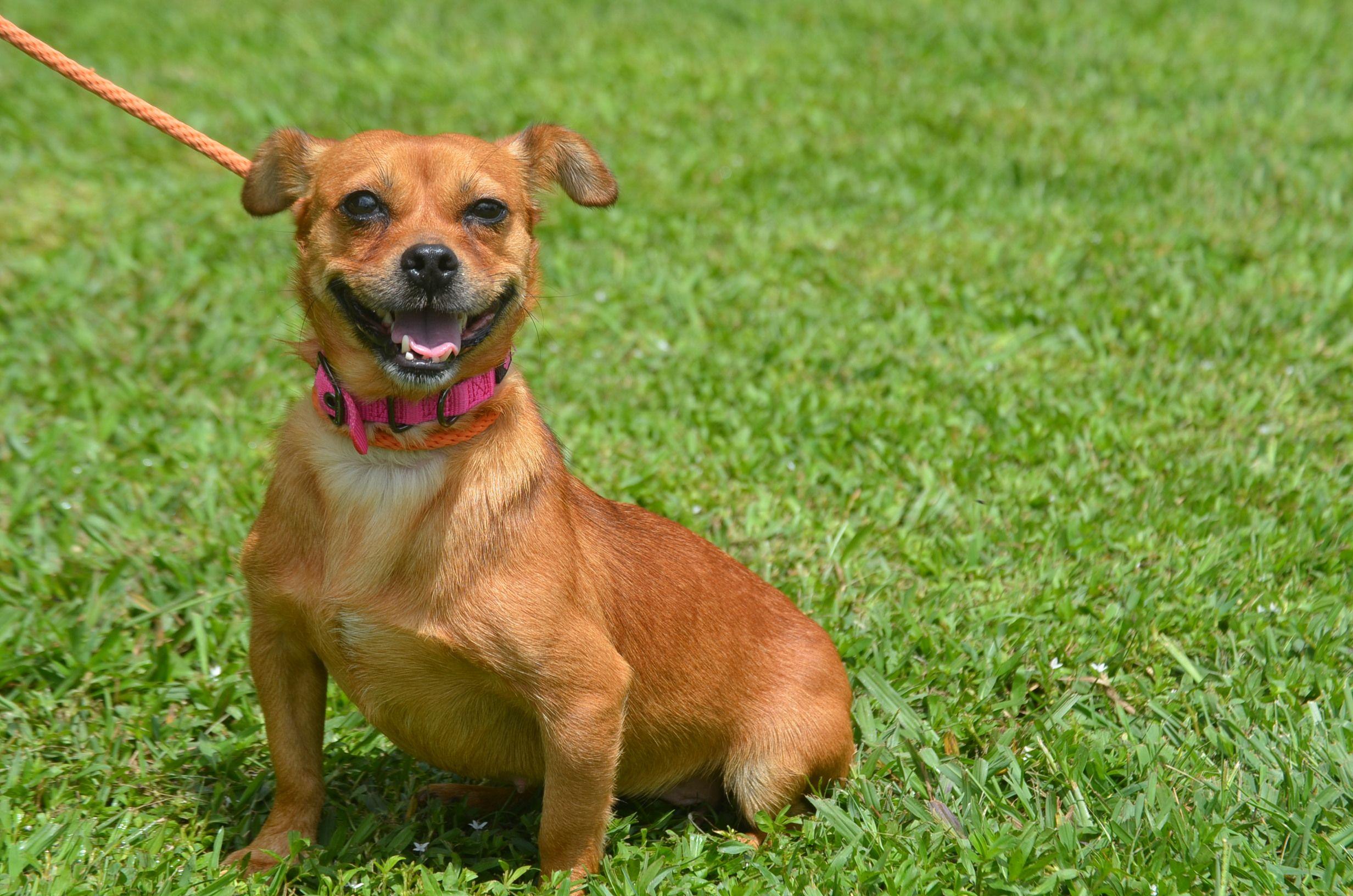 Daug Dog For Adoption In Doylestown Pa Adn 428164 On Puppyfinder