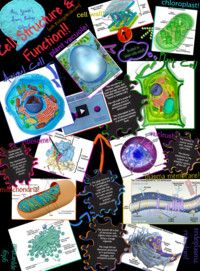 cell structure function eukaryotic cell biology cell on cell wall function id=67271
