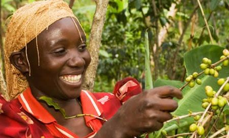 A fairtrade worker in Ghana working on a farm  - Voyage Fairtrade