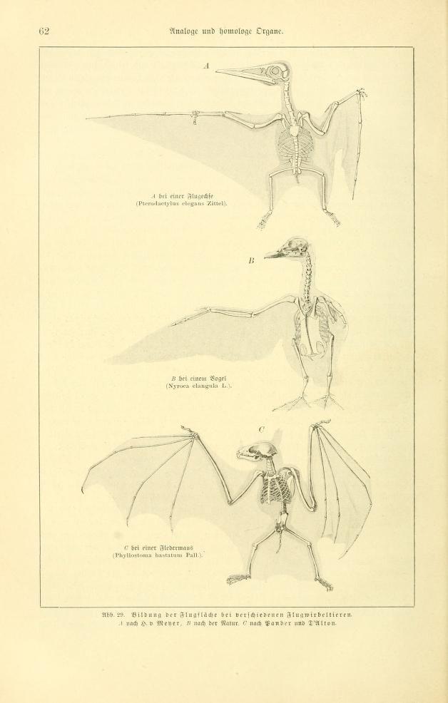 v.1 (1910) - Tierbau und tierleben in ihrem zusammenhang betrachtet ...