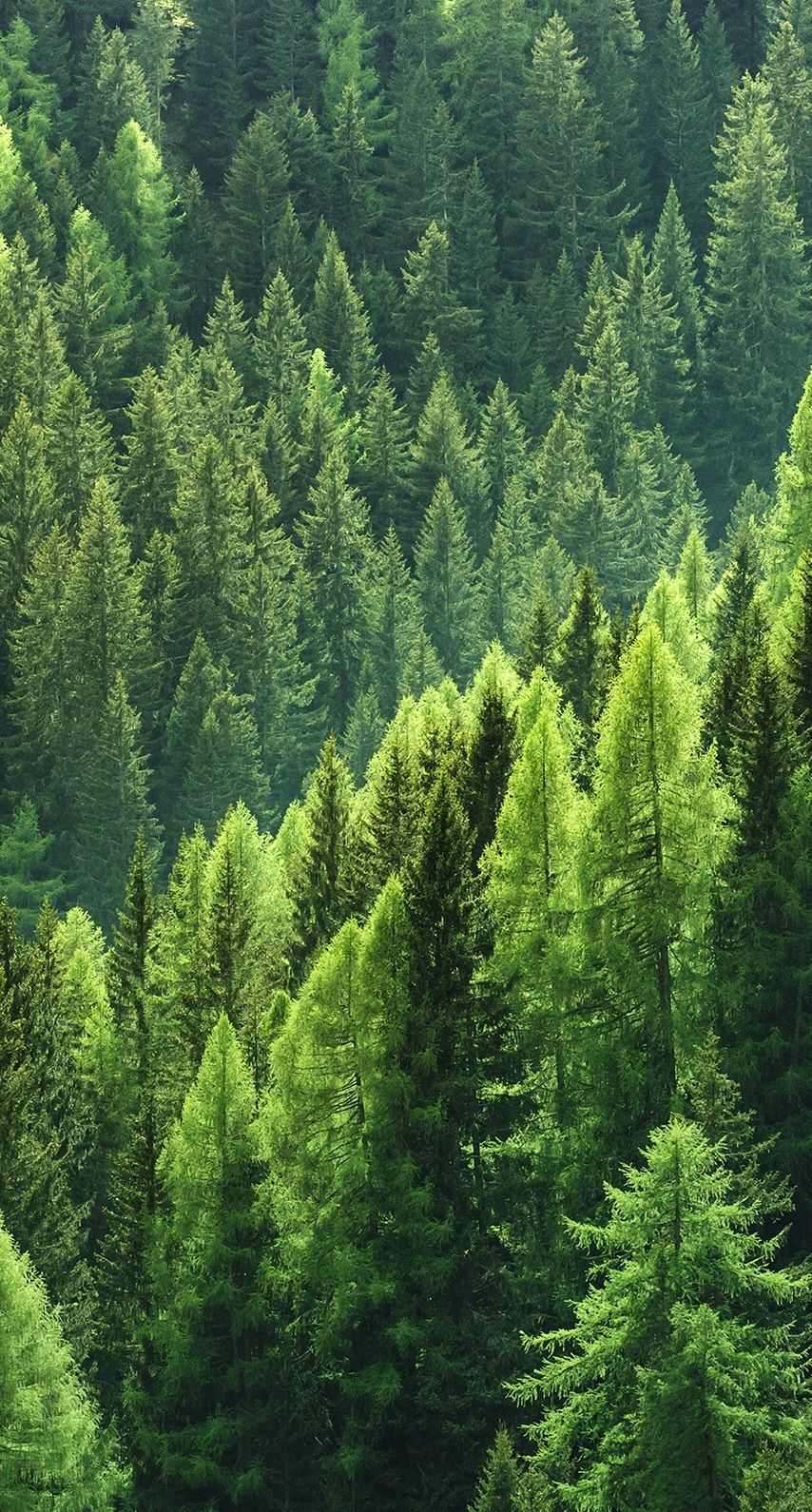 Bright green pine tree forest. Nature in 2019 Forest