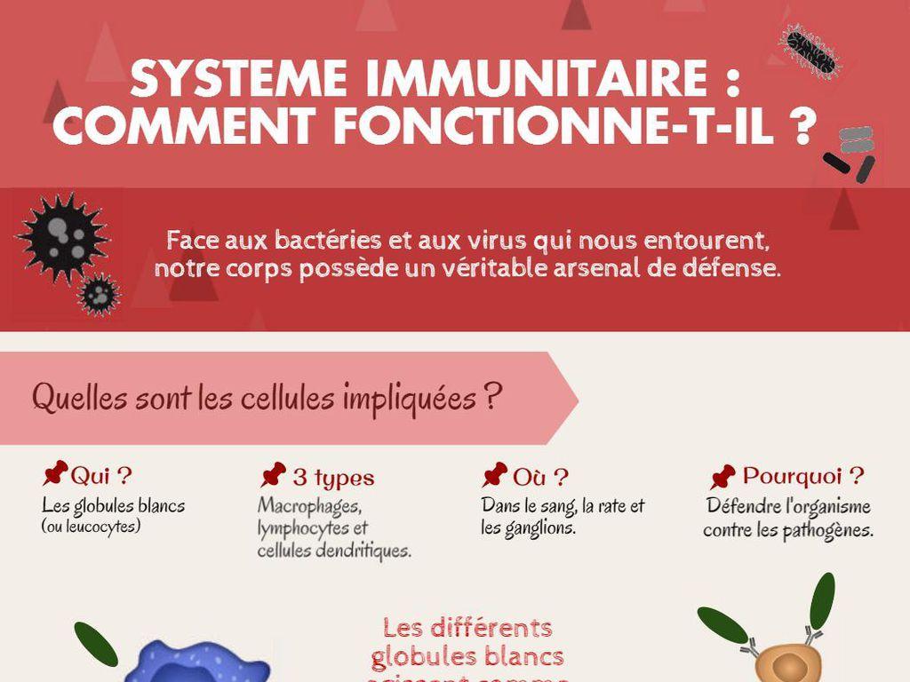 Comment Avoir Des Defenses Immunitaires