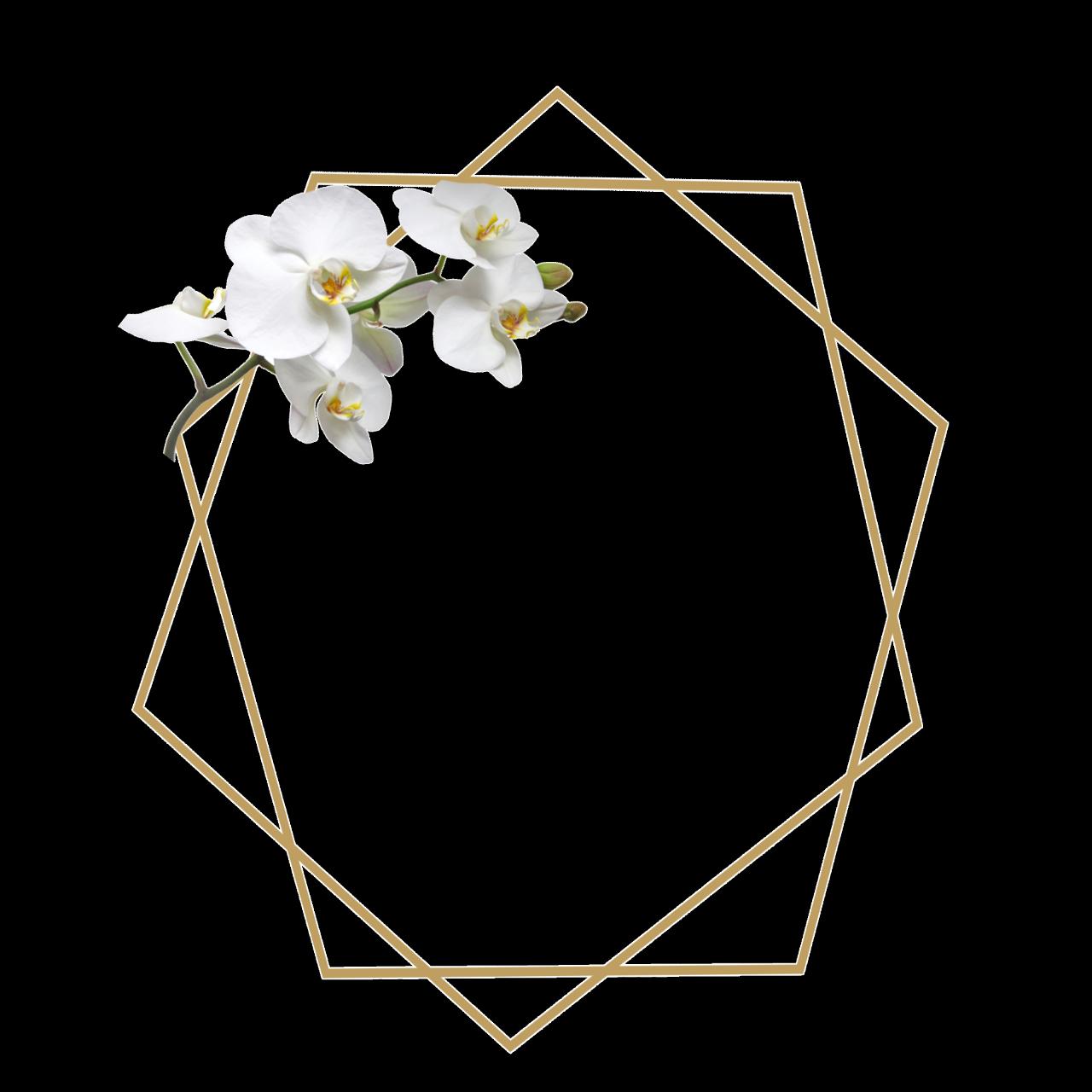 ورد اوركيد ثيم ذهبي اطار Sticker By Um Saif Flower Graphic Design Floral Border Design Baby Print Art