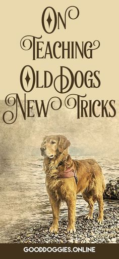 How To Teach An Old Dog New Tricks Dog Training Tips Advice