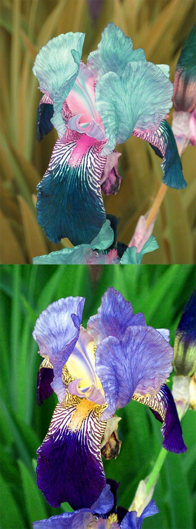 Pin On Photoshoped Viral Plants And Fungus