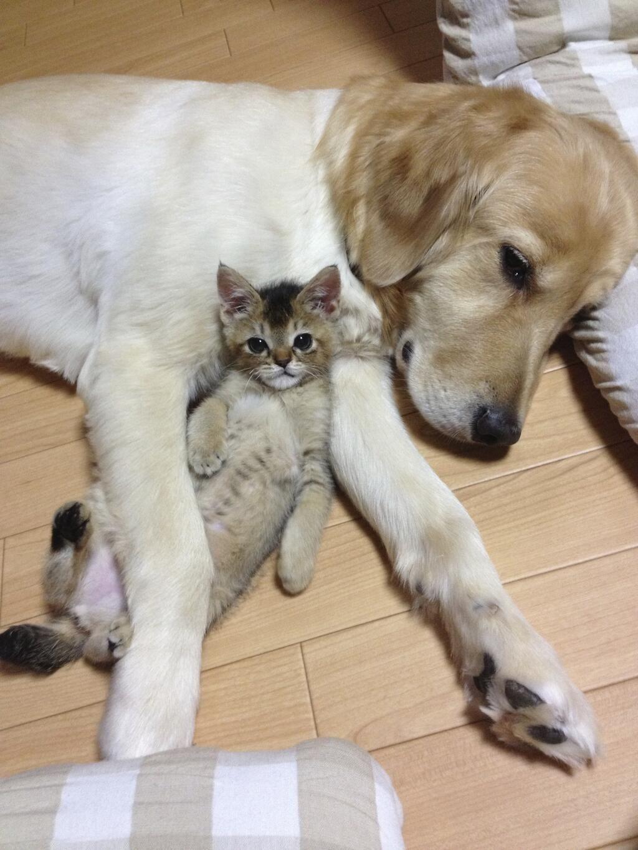 猫のわさびちゃん