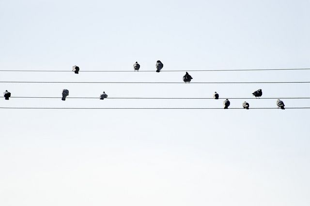 Minimalist Classroom Music ~ Minimal photography pinterest bird note and