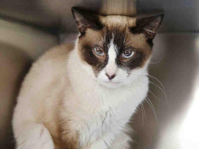 Cats And Kitties For Adoption Cat Adoption Kitten Adoption Cats