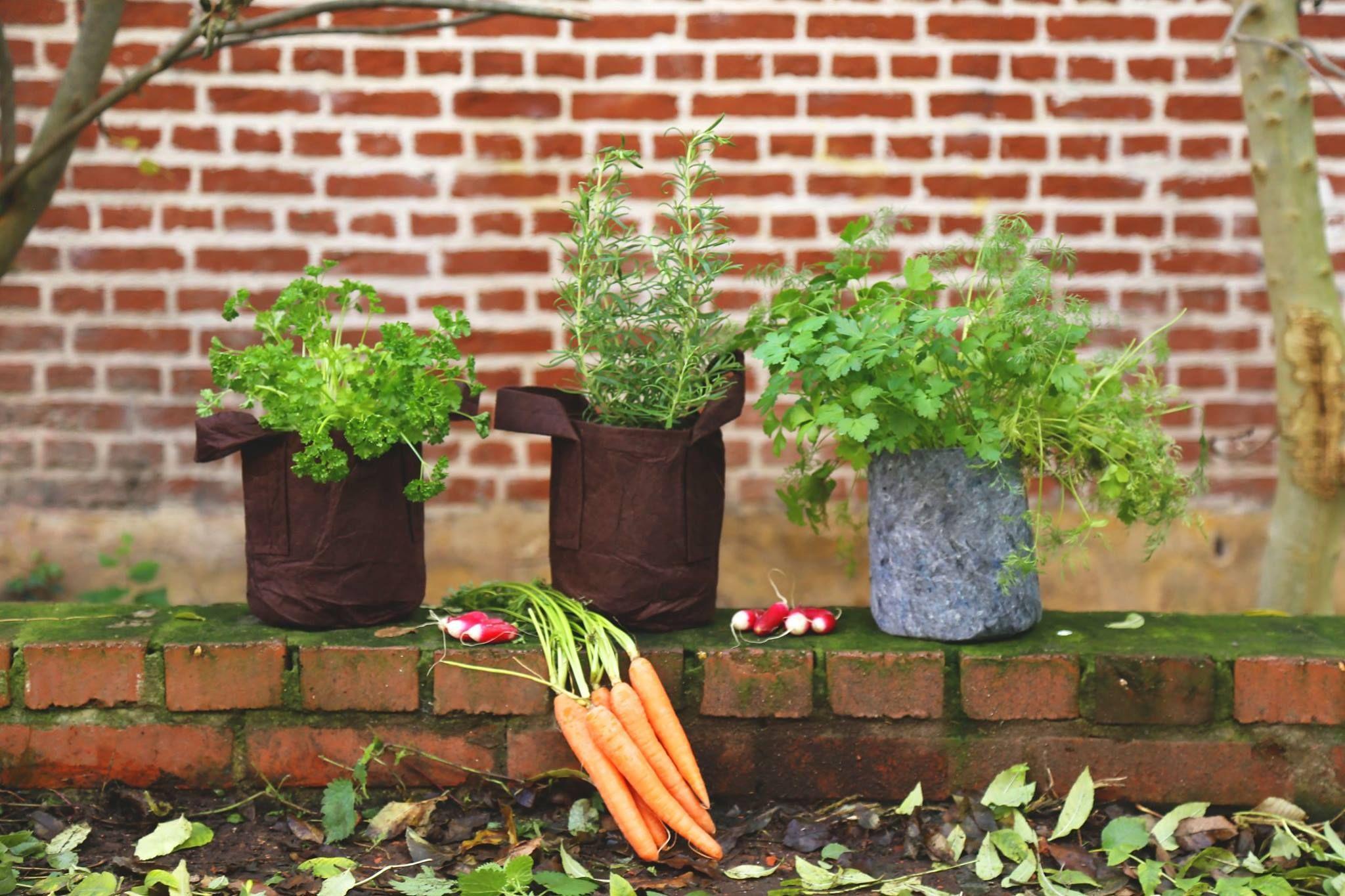persil romarin coriandre conseils de jardinage. Black Bedroom Furniture Sets. Home Design Ideas
