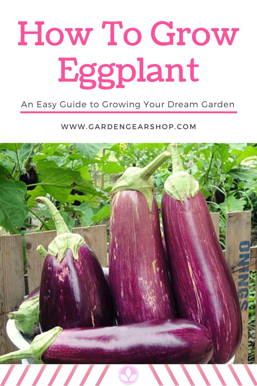 How To Grow Eggplant In 2020 Eggplant Plant Eggplant Home Vegetable Garden