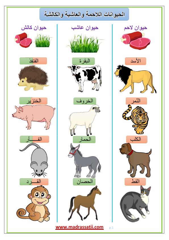 الحيوانات اللاحمة و العاشبة و الكالشة التغذية عند الحيوانات صور موقع مدرستي Learning Arabic Kids Education First Fathers Day Gifts