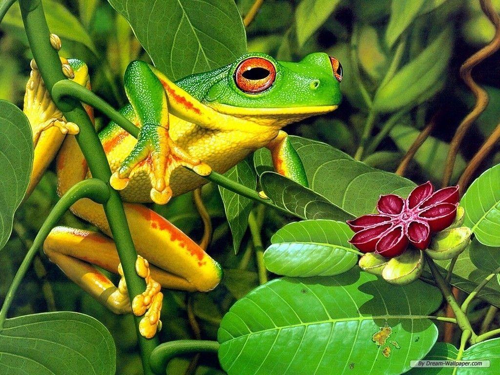 25 best ideas about Frog Wallpaper on Pinterest  Kermit the frog