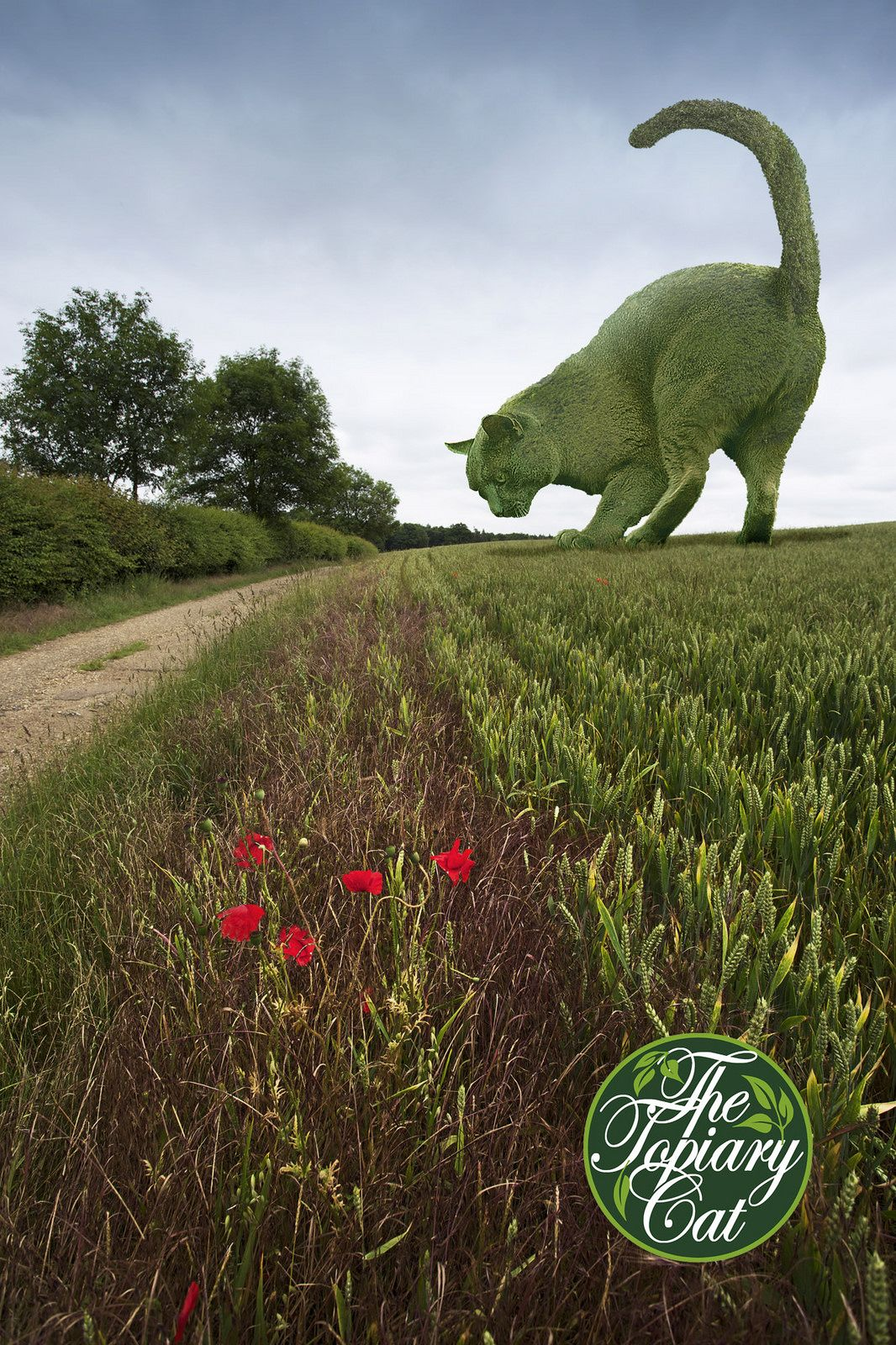 The Topiary Cat on the move | Topiary, Cat and Gardens