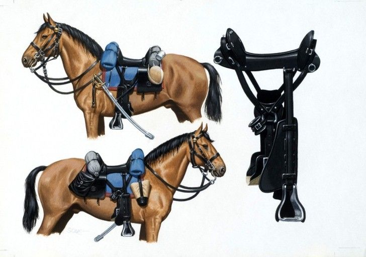 David Sque Illustrations — Books: U.S. Cavalry Horse | McClelland