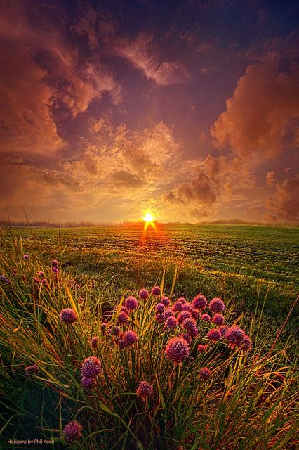 Summer Field At Sunset Marvelous Nature Beautiful Nature Beautiful Landscapes Nature Photography