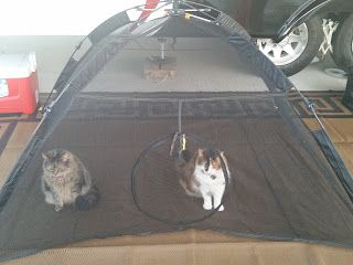Photo of Why Cats Make Great RV Companions – Always On Liberty