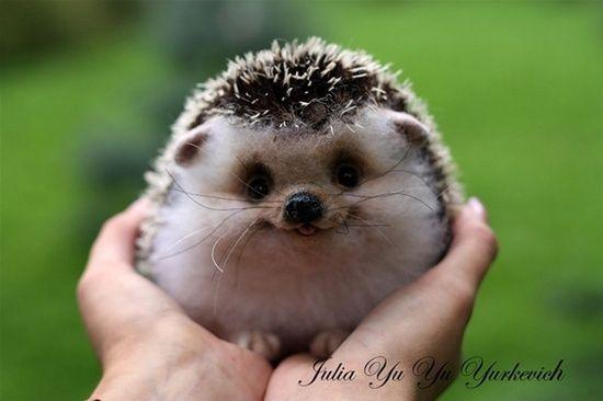 Aw Happy Hedgehog So Cute Cute Baby Animals Cute Animals Animals
