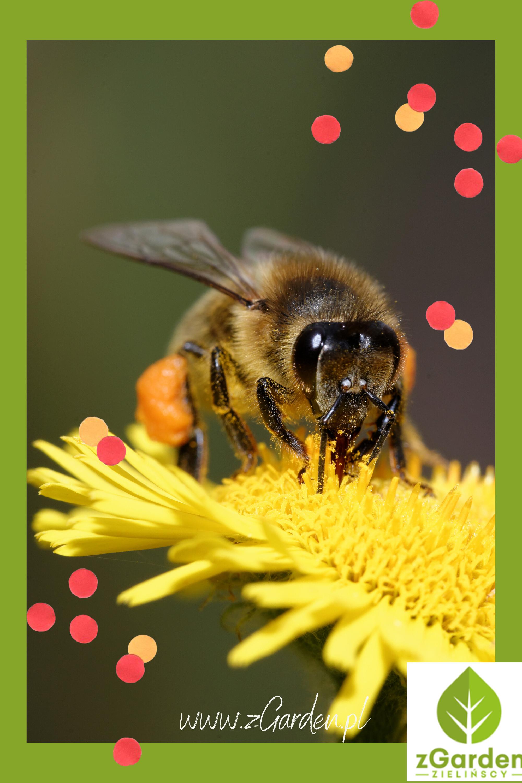 Pszczoly W Ogrodzie Edible Bee Pinterest