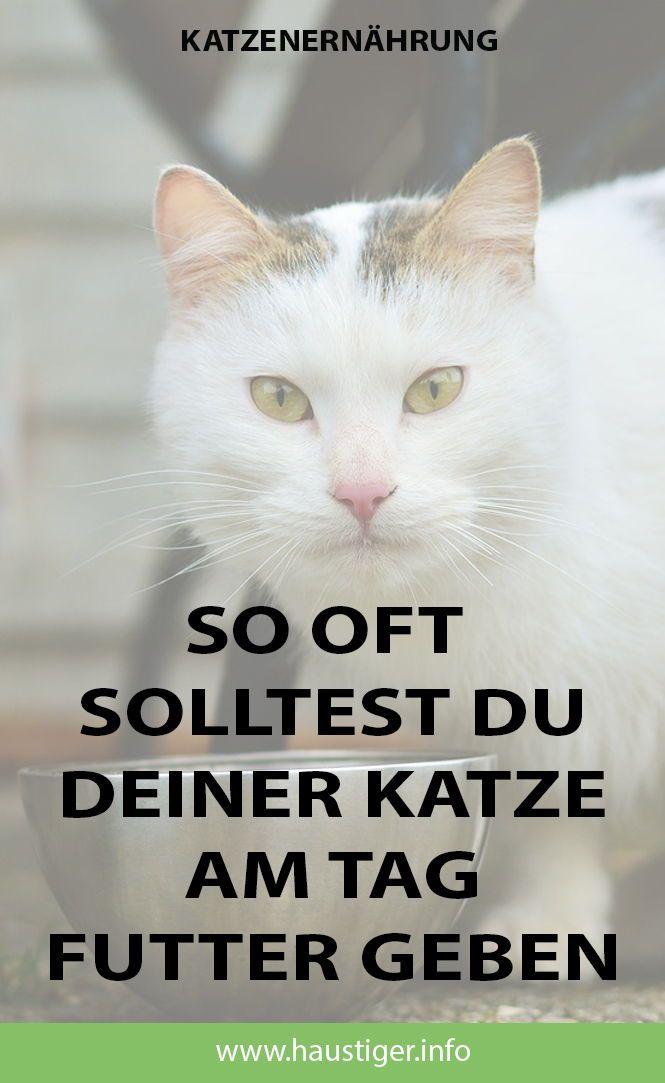 Magazin für Katzenthemen #katzengeburtstag