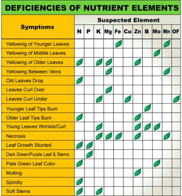 Leaf illustrations and charts to help diagnose plant for Indoor gardening nutrients