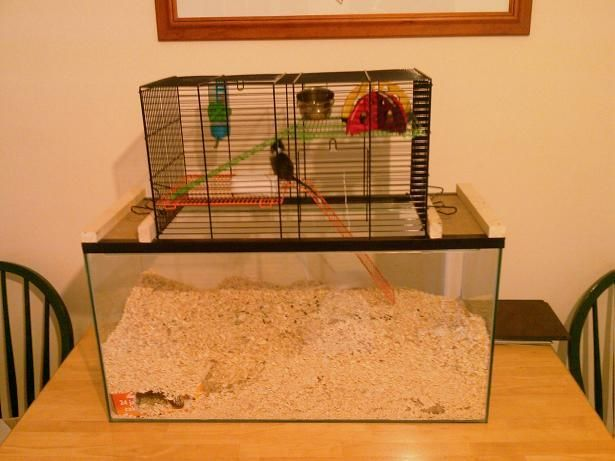 Gerbil Housing Pictures The Gerbil Forum Gerbil Cages Mouse