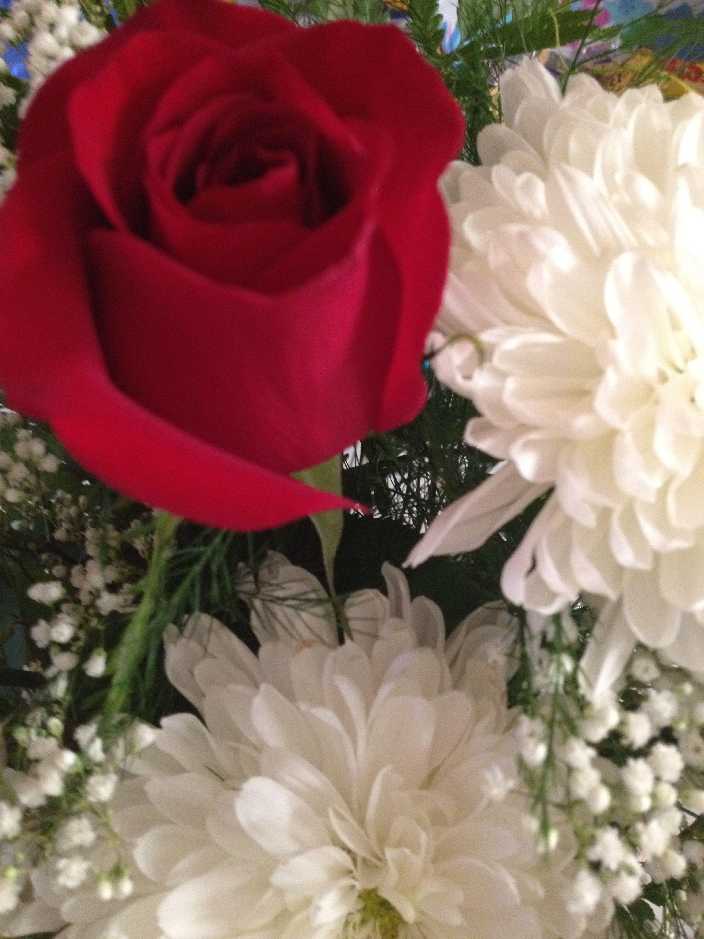 Wedding Anniversary Flowers Red Roses, White Mums, White