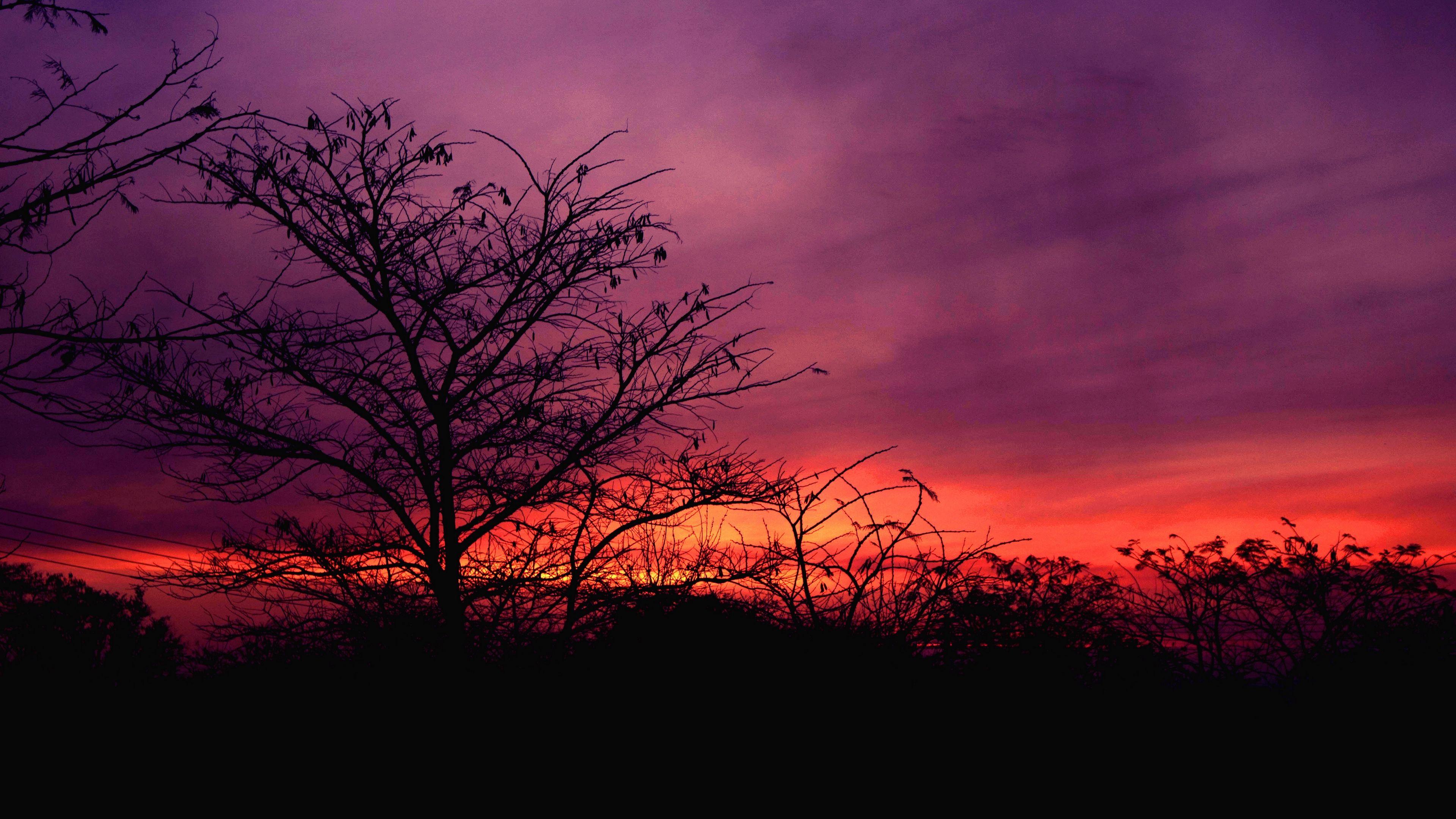 Tree Sunset Sky Clouds 4k Tree Sunset Sky Tree Sunset Wallpaper Sunset Wallpaper Nature Wallpaper Pink sky sunset sun trees nature